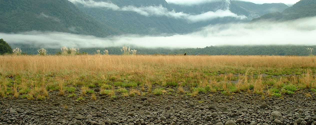 Paysage du Sud du Chili où pousse le Maqui